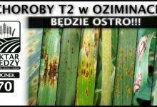 Photo of ZAPOWIEDŹ | BĘDZIE OSTRO!!! CHOROBY T2 W OZIMINACH. | ODCINEK #70