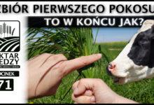 Photo of ZAPOWIEDŹ | TO W KOŃCU JAK? ZBIÓR PIERWSZEGO POKOSU! | ODCINEK #71